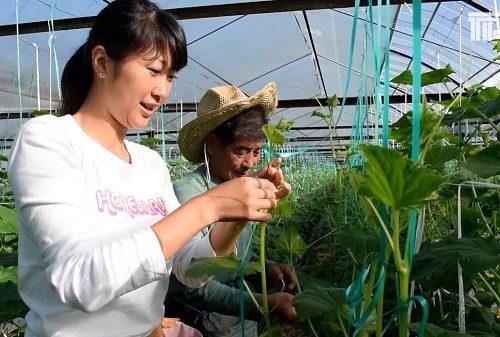 3q-tuyen-9-nu-lam-nong-nghiep-trong-trot-tai-nhat-ban-luong-co-ban-33-trieu