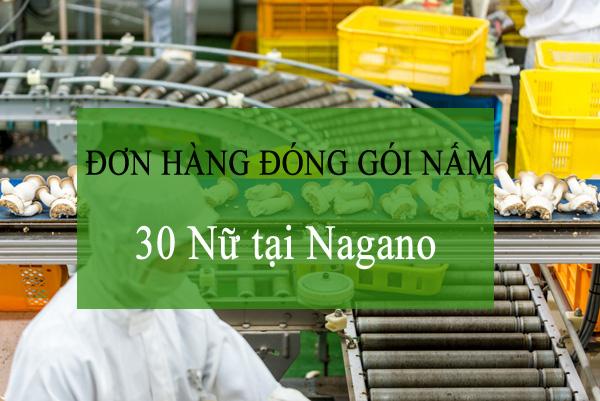 Xuất khẩu lao động Nhật Bản đơn hàng trồng nấm tại Nagano