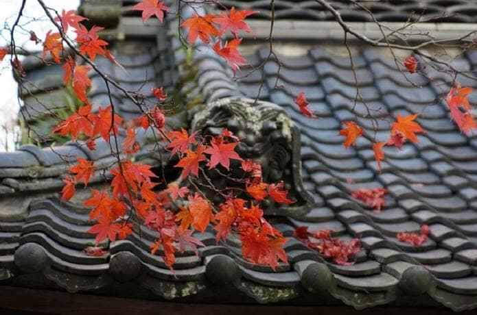 Mùa lá đỏ ở Nhật vào tháng mấy