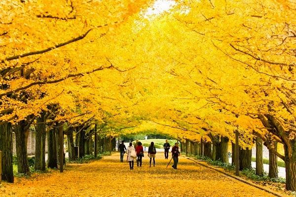 Mùa lá vàng ở Nhật
